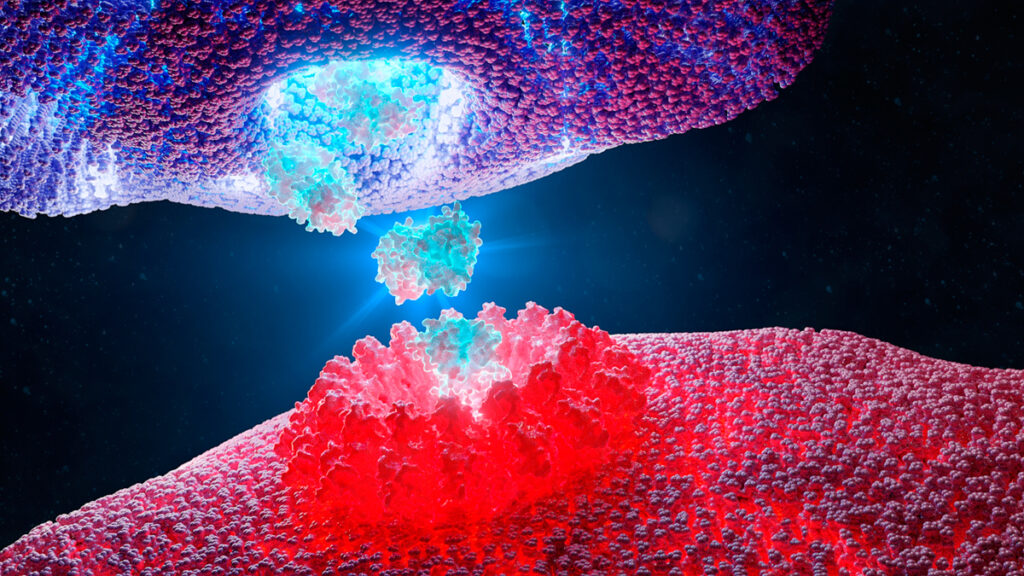 T cell destroying a cancer cell using pore forming perforin and granzyme which triggers the cancer cell death